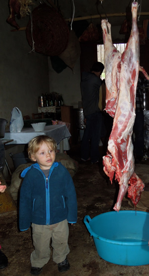 Rum checking out the freshly slaughtered Easter lamb hanging in farmers cellar