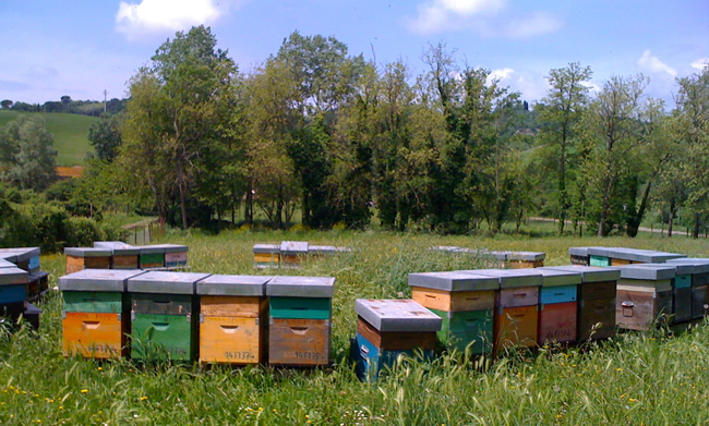 large established bee families